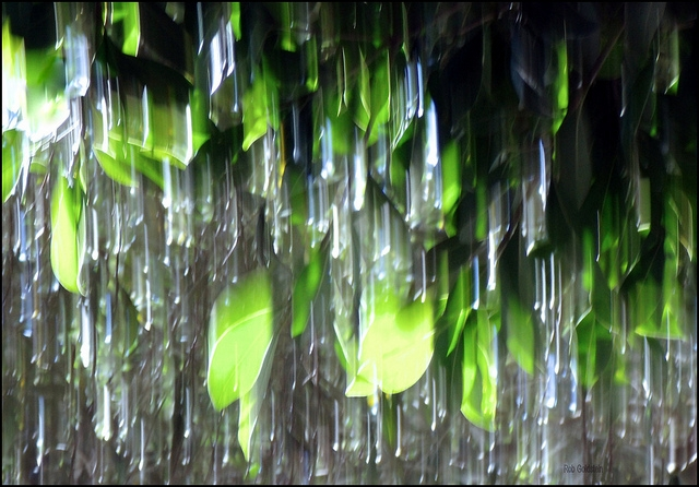 Photograph of leaves in a pouring rain