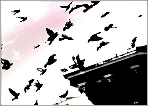Digital painting based on a photograph of Birds gathering on a rooftop