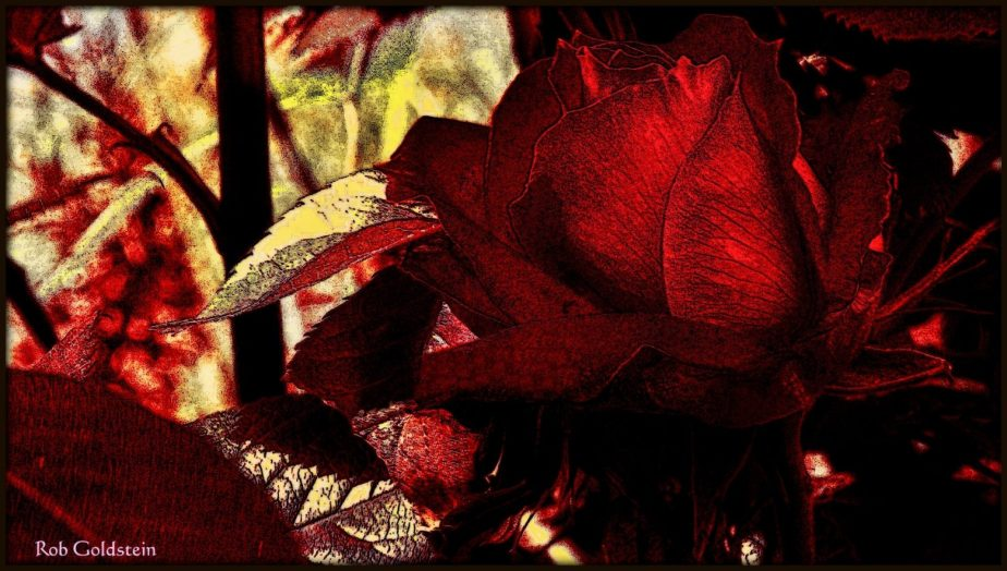 Surrealist photograph of a red rose