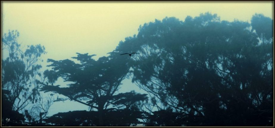 A bird in flight in Golden Gate Park at dusk