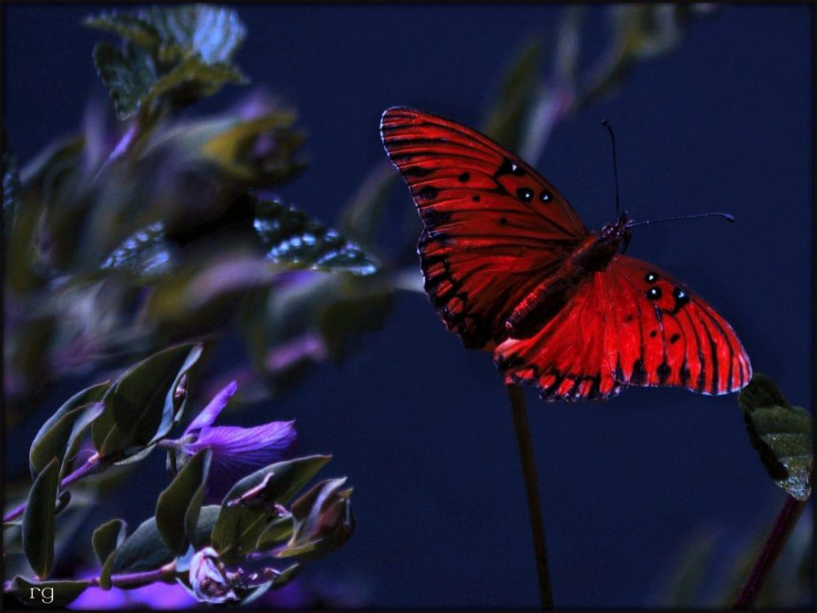 photograph of a monarch butterly