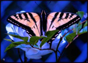 Spring Butterly