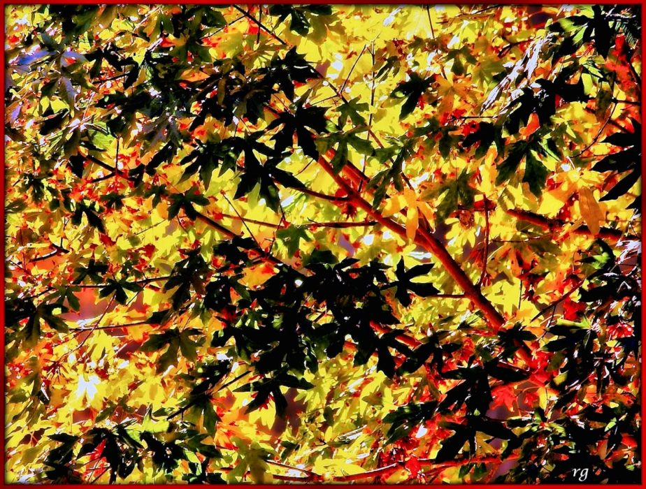 Digital Painting based on Autumn Leaves