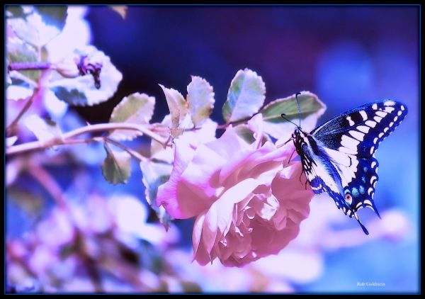 Butterly Memory