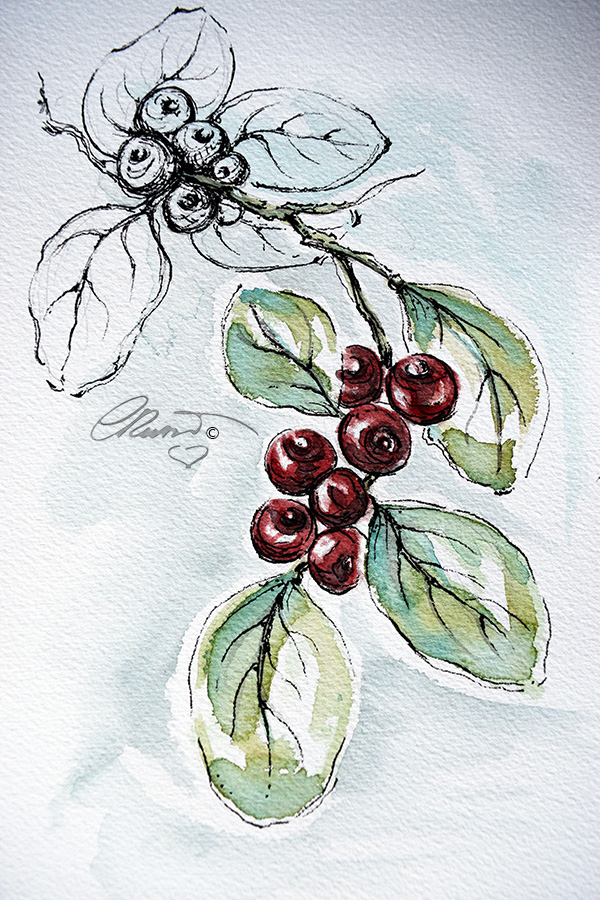 CRANBERRIES  #WorldWatercolorGroup