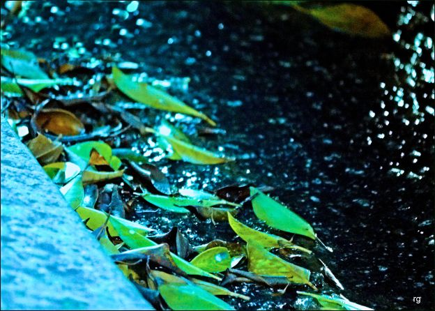 Photograph of wet leaves in the curb.