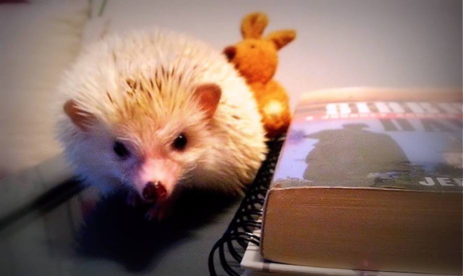 Digital photograph of a Hedgehog