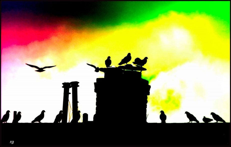 Digitally painted photograph of a flock of birds on a rooftop. The birds are a silhouette against a red, yellow and green background