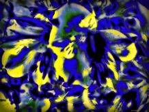 Digitally altered blackberry photograph of a flower of unknown origin