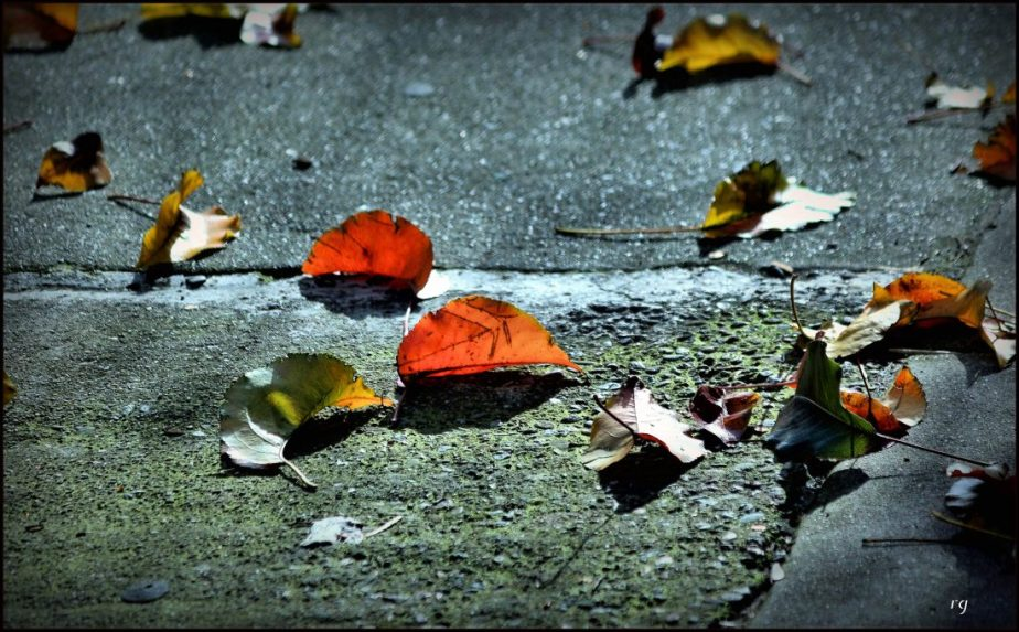 Autumn leaves on the ground in San Francisco