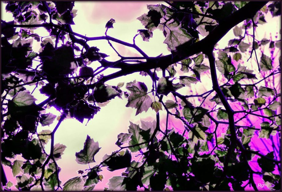 A digital Painting in lavender based on a photograph of leaves on a tree