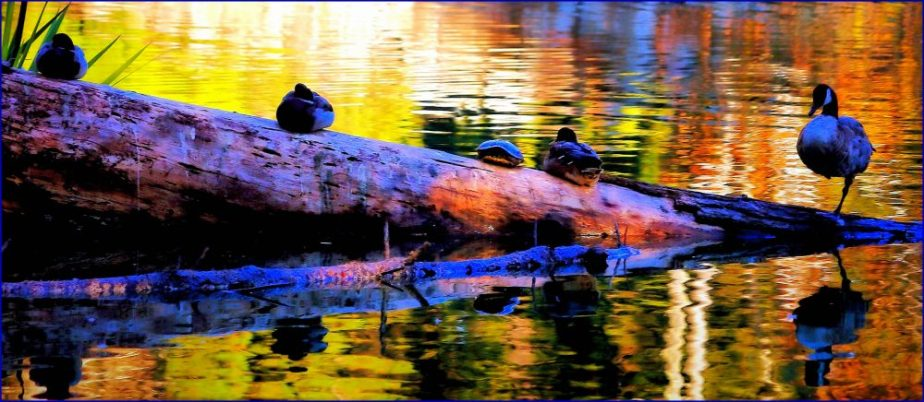 A photograph of water fowl at sunset