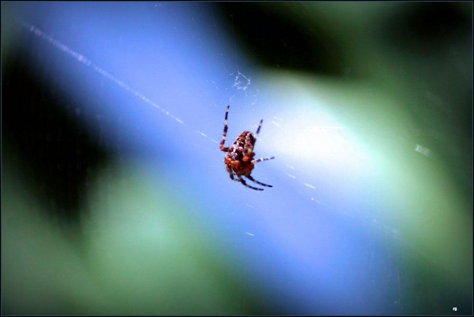 A macro photograph of a spider spinning its web